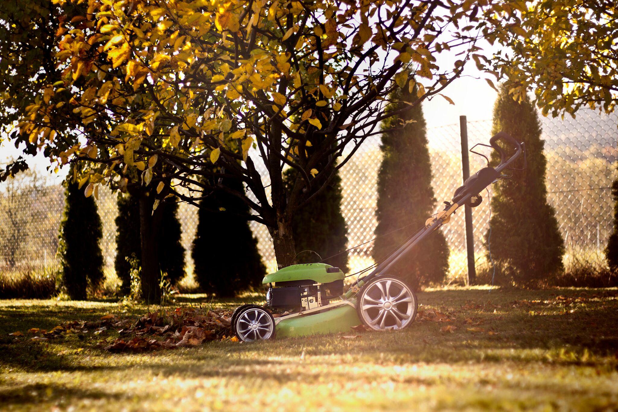 Gyepgondozás ősszel